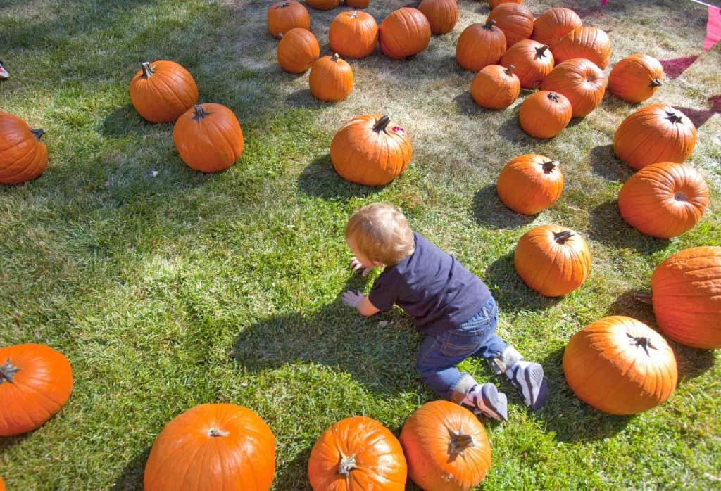 The Kids Pumpkin Patch is always a favorite