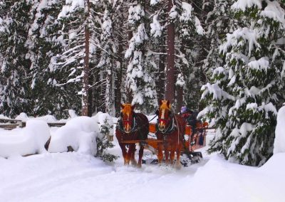 sleigh ride in the snow during Christmas in Lake Tahoe